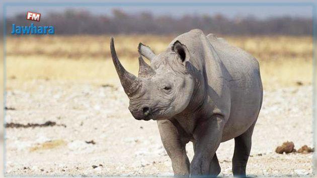 نفوق آخر وحيد قرن ذكر في العالم