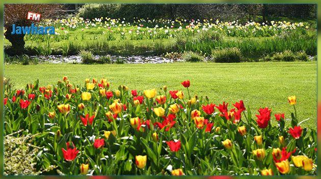 الربيع يبدأ اليوم.. رغم التقلبات
