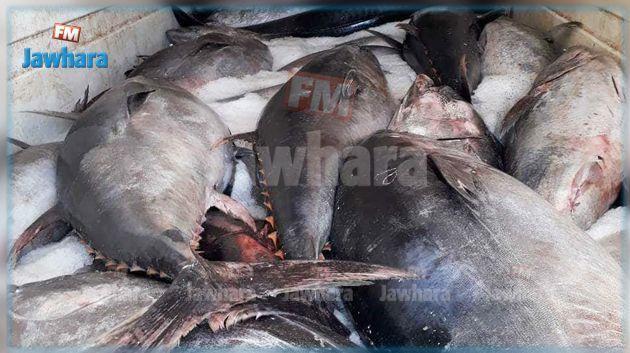 7 رخص جديدة لصيد التن الأحمر