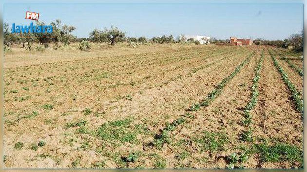 استرجاع 98 هكتارا من الأراضي الدولية المستولى عليها دون وجه حق