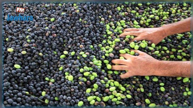 زغوان : إيقاف شخصين بتهمة سرقة محاصيل زيتون