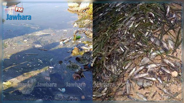 مد أحمر بسواحل قابس وصفاقس وقرقنة : وزارة الفلاحة توضح هذه الظاهرة وتحذر من الأسماك النّافقة