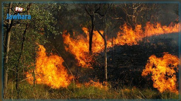 سليانة: السيطرة على حريق نشب في غابة ب8 نقاط مختلفة