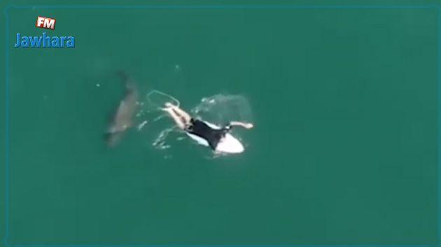 مواجهة مرعبة بين سمكة قرش وراكب أمواج تحصد ملايين المشاهدات