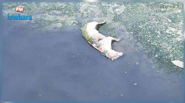 كارثة بيئية وصحية.. هذه المياه تُضخ للمواطنين دون معالجتها !