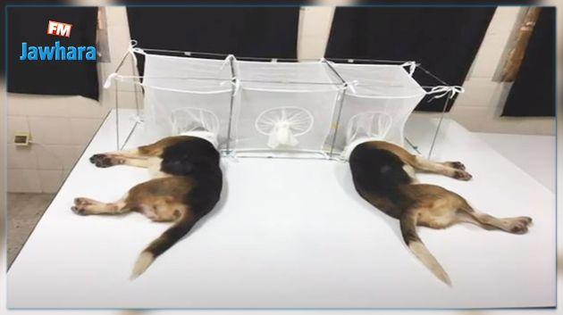الهاشمي الوزير ينفي تعذيب الكلاب للقيام بتجارب مخبرية بمعهد باستور (فيديو)