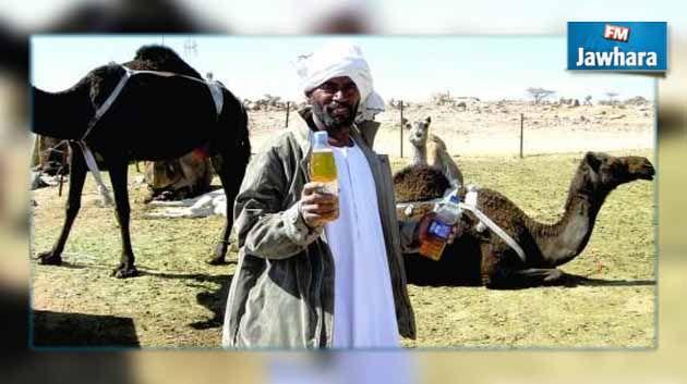 Image result for بول البعير السعودية