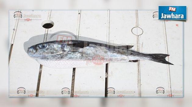 poissons homme datant poissons femelle